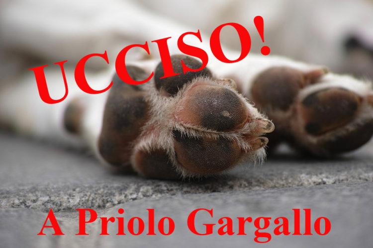 CANE PRIOLO GARGALLO